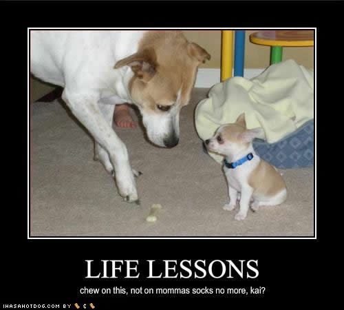 Funny Life Lesson Meme : Things i ve learned this week nucking futs mama